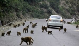 They're loose. Monkeys everywhere.