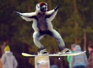 Oh, no! It's a monkey!